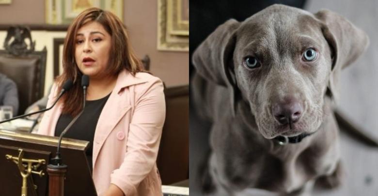 Diputada propone matar perros y gatos