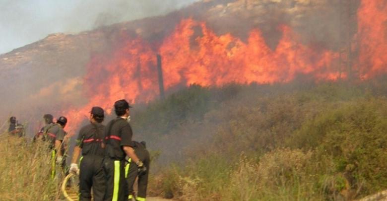 Incendios forestales afectan superficie de 5 mil 424 hectáreas en Tamaulipas